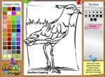 Coloring Southern Lapwing